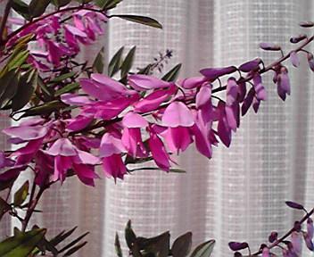 あでやかなピンクの花です
