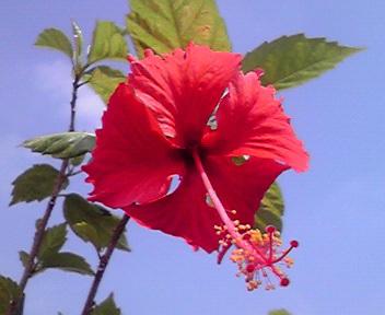 夏の赤と青